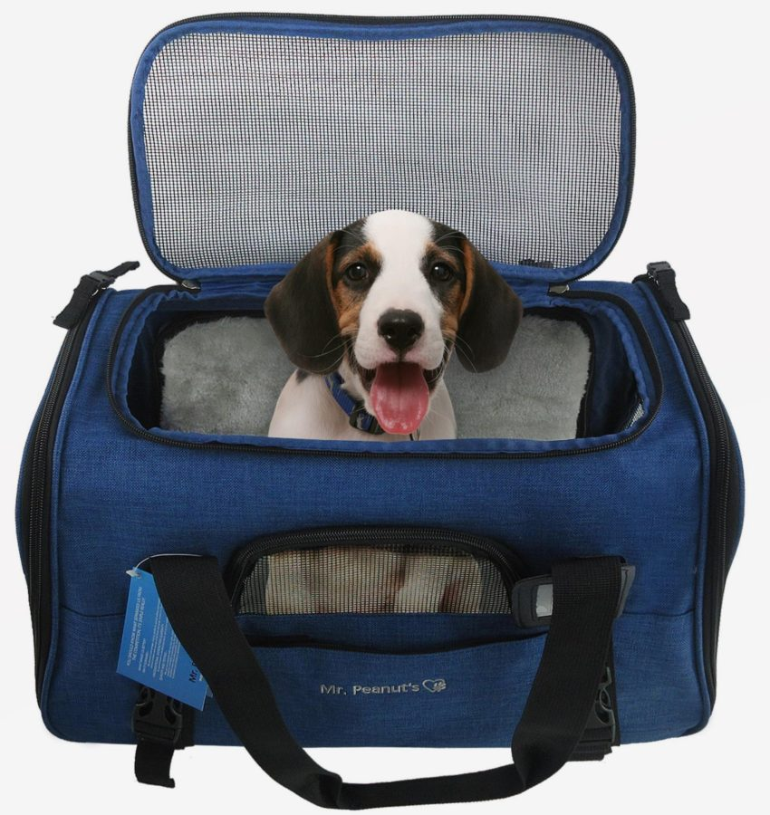 January 2nd Is National Pet Travel Safety Day Pet Safety
