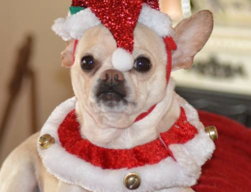 Important Holiday Pet Safety Reminders